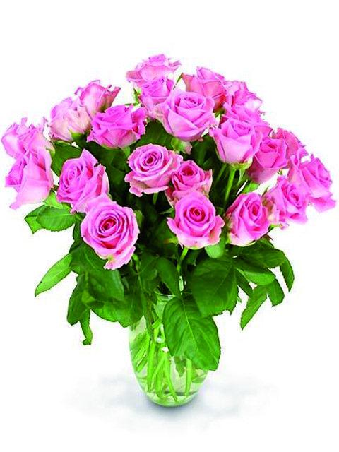 24 rose rosa