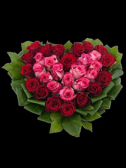 Cuore di rose rosse e rosa con verde decorativo