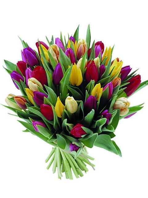 Mazzo di tulipani dai colori pastello
