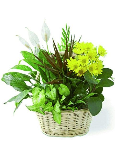 Cesto con piante miste