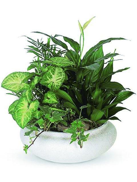 Vaso con piante miste