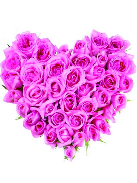 cuore di rose rosa