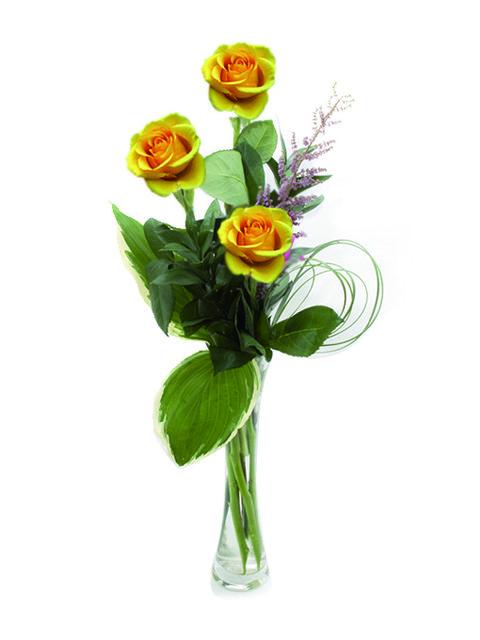 tre rose gialle