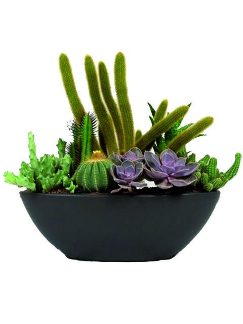 Vaso di piante grasse