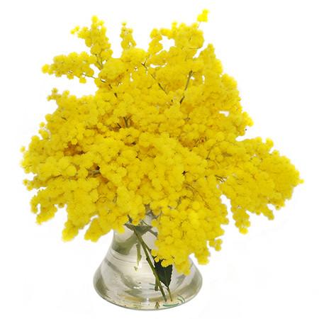 fiori per la festa della donna mimosa