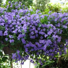 Fiori per terrazzo o giardino